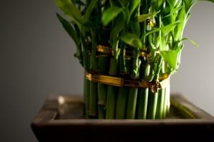 Bamboo Bundle